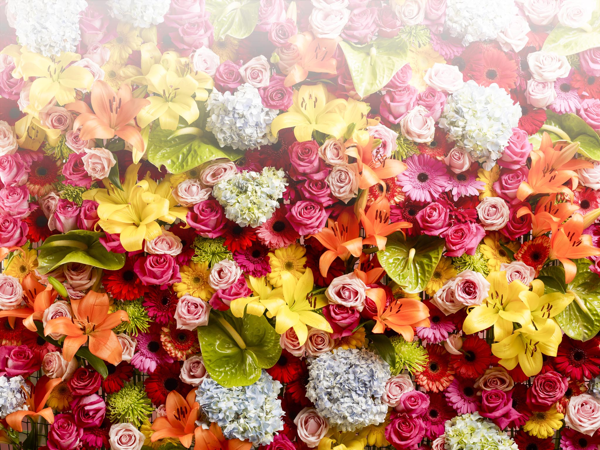 Quan les flors